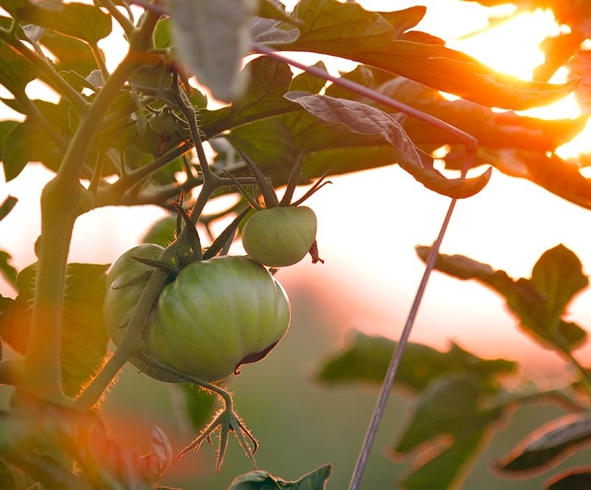 traducción de petición agroalimentaria