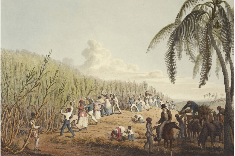 Slaves cutting sugar cane on Antigua island British Library picture. CSR.
